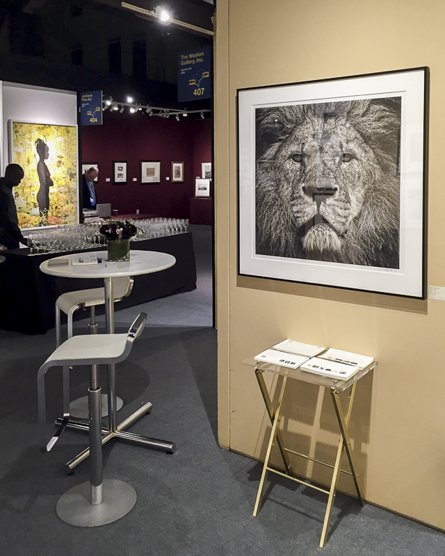 IMG_0004, Lion's Stare print at AIPAD 2016, New York City (© Davi Weston, Weston Gallery)-2 web.jpg
