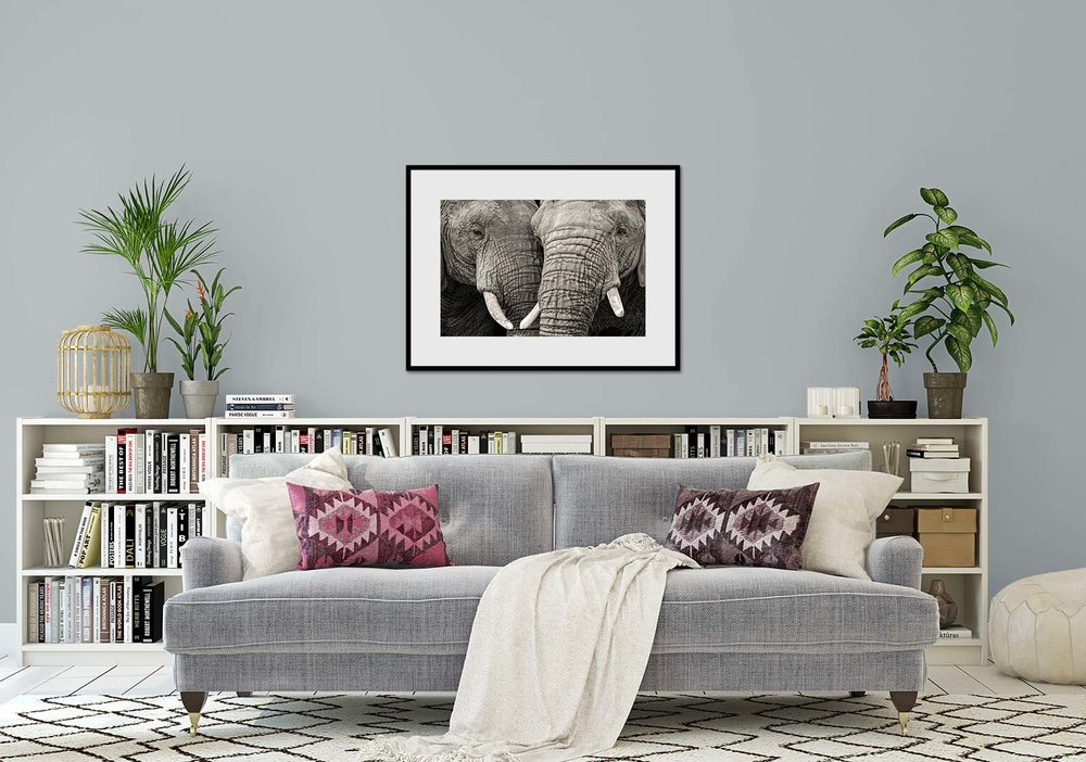 Two Elephants. Limited edition prints by fine art photographer Paul Coghlin. Black and white portrait of two elephants nuzzling. The print hangs in a living room.