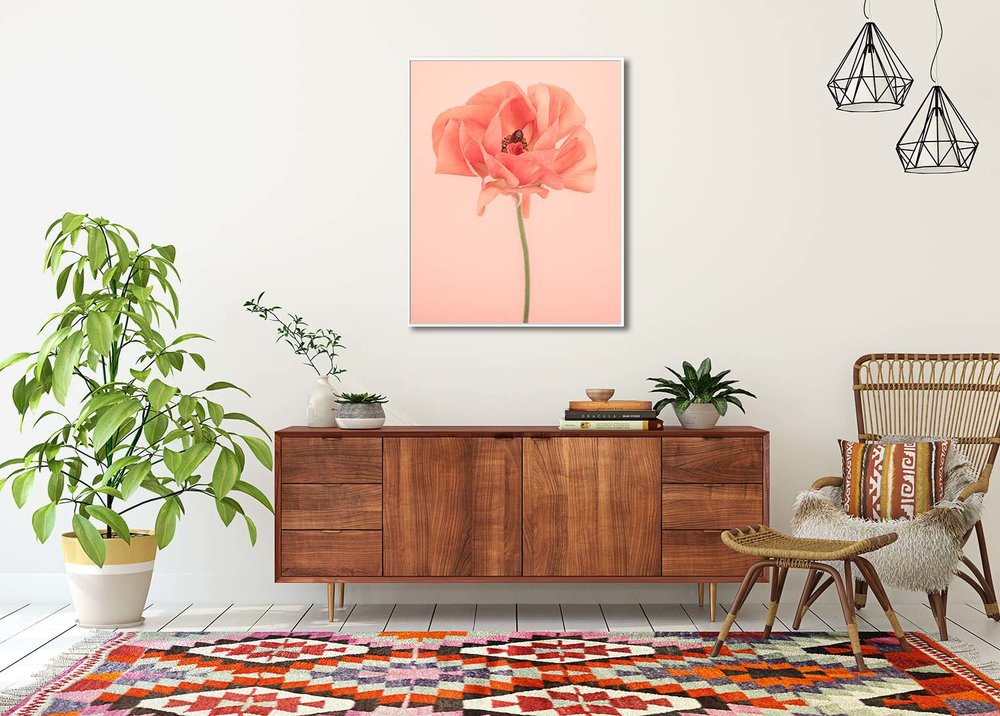 Limited edtiion photographic print of an orange ranunculus by fine art photographer Paul Coghlin. Shown in a room setting