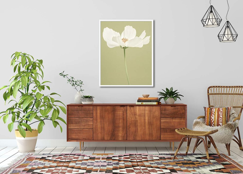 White Cosmos on a green background. Limited edition botanic print by fine art photographer Paul Coghlin.