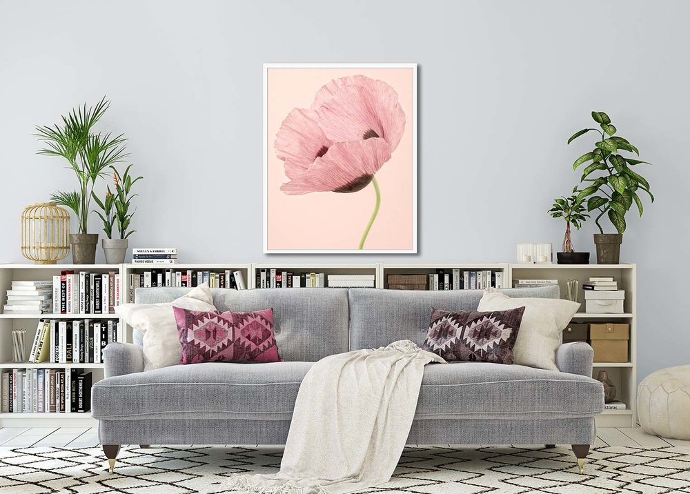 Opium Poppy I. Limited edition botanic prints by fine art photographer Paul Coghlin.