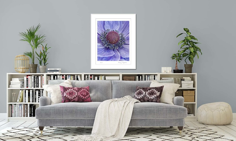 Blue Anemone on a pale blue background. Limited edition fine art prints by fine art photographer Paul Coghlin.