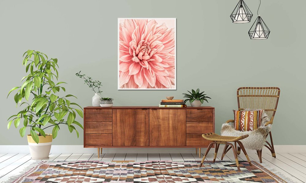 Dahlia Flames I. Limited edition photographic print of a pink dahlia by fine art photographer Paul Coghlin.