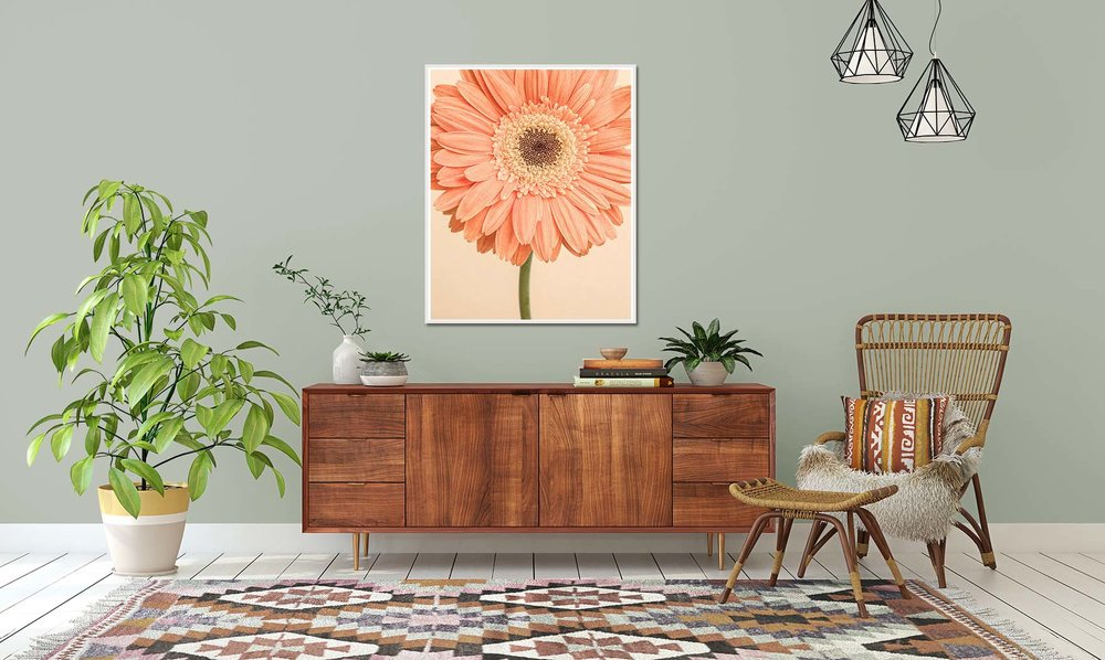 Peach coloured Gerbera print. Limited edition photographic prints of flowers by fine art photographer Paul Coghlin.