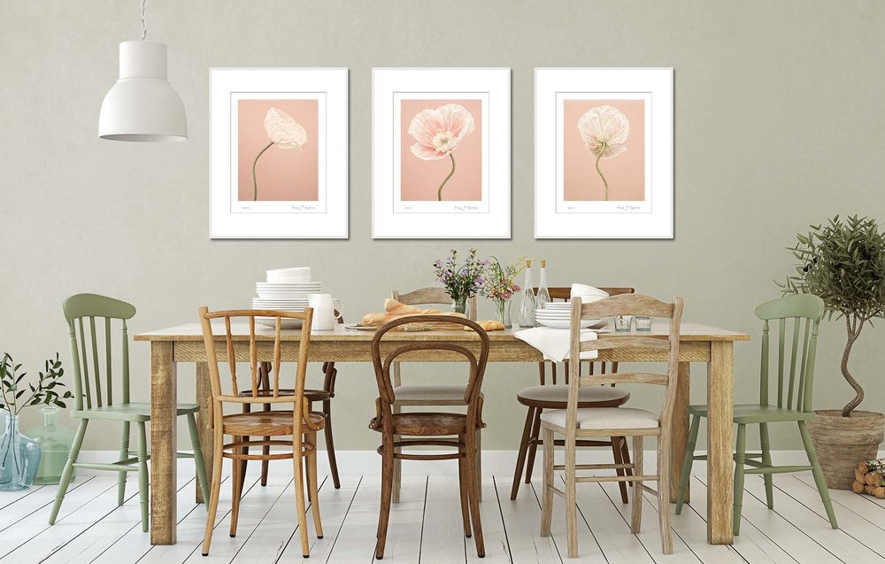 Peach coloured Icelandic Poppies on a peach background. Limited edition photographic prints by fine art photographer Paul Coghlin.