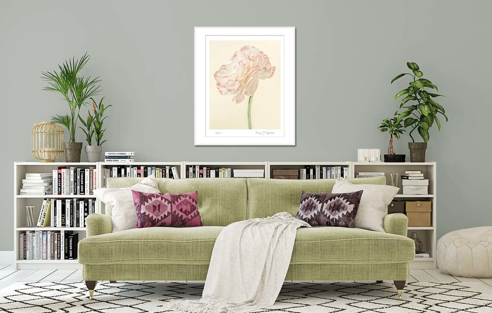 Yellow Ranunculus I. Limited edition photographic prints by fine art photographer Paul Coghlin. Botanical and floral artwork.