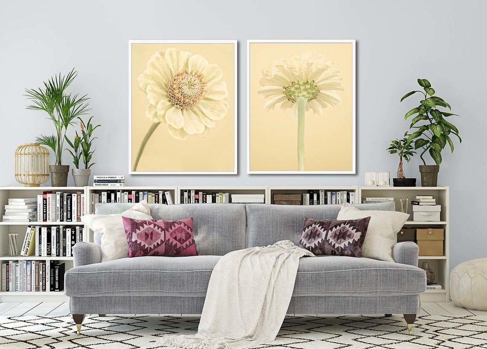 Pale Yellow Zinnia I + II. Limited edition botanical prints by fine art photographer Paul Coghlin