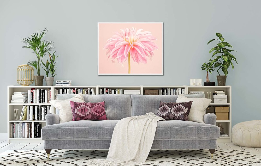 Pale Pik Dahlia. Limited edition photographic print of a pink dahlia on a pink background by fine art photographer Paul Coghlin.