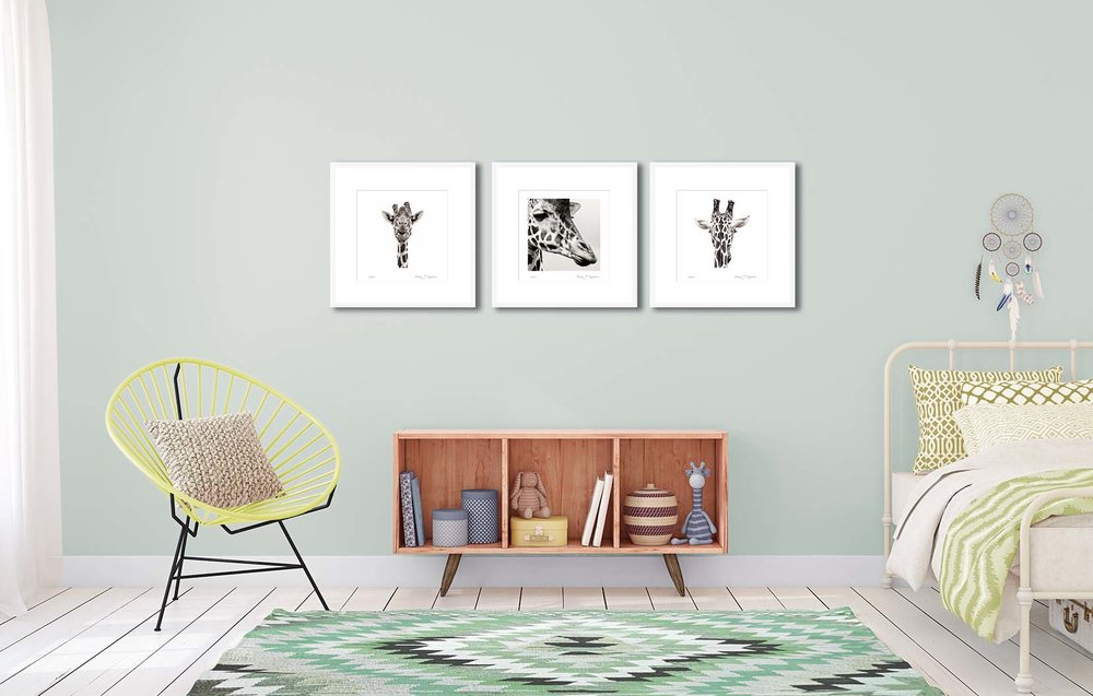 Three giraffe prints. Black and white animal prints by fine art photographer Paul Coghlin. The animal portraits are limited edtion photographic prints.