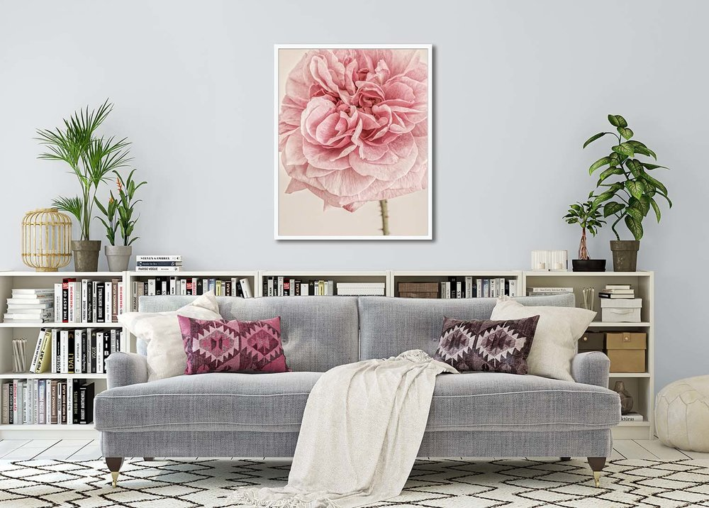 Colour floral print of an Engliah Rose in a lounge setting. Limited edition photographic prints by fine art photographer Paul Coghlin