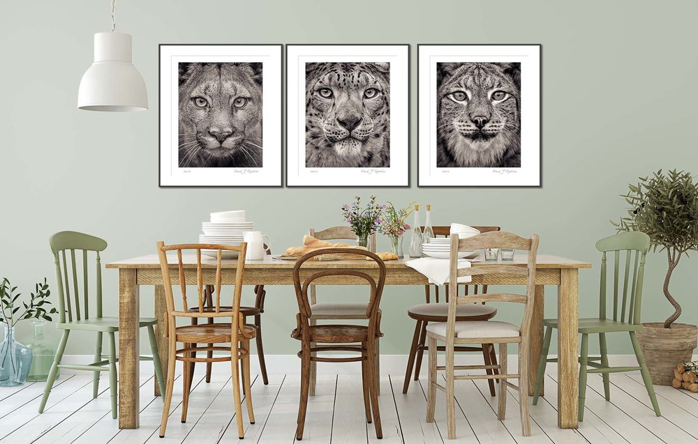 Poirtrait of a Snow Leopard from the Fading From View series. Big cat and animal prints by fine art photographer Paul Coghlin. Limited edition photographic prints.