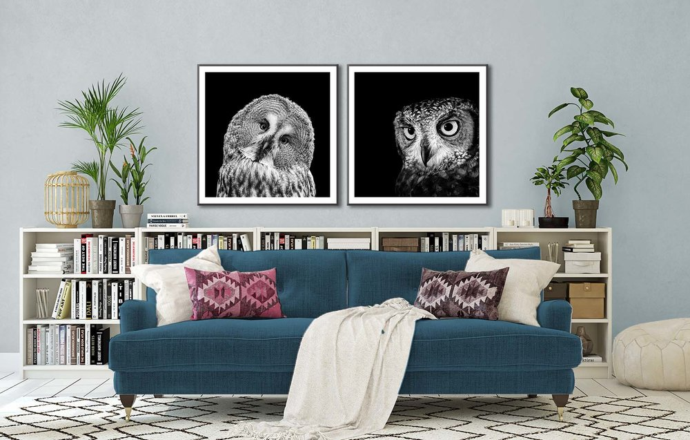 Two black and white limited edition owl portraits by fine art photographer Paul Coghlin.