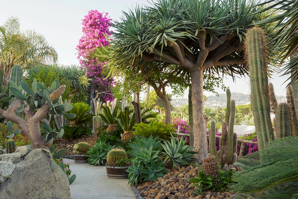 1000_Short-listed_Agave, Aloe Barberae (tree like), Bougainvillea, Opuntia fragilis (Prickly pear), Cycas_E2A2772 copy.jpg