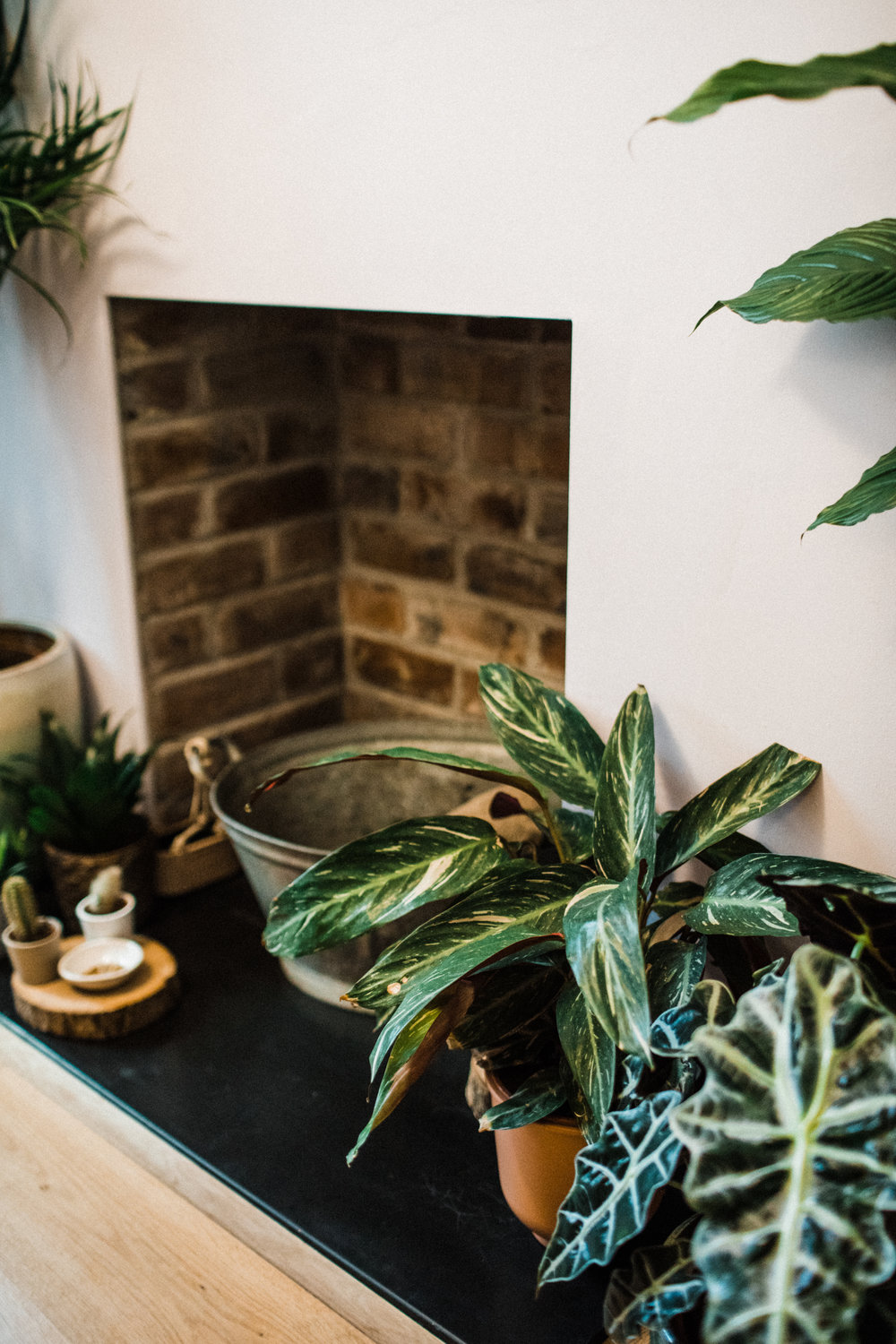 House plants purify the air