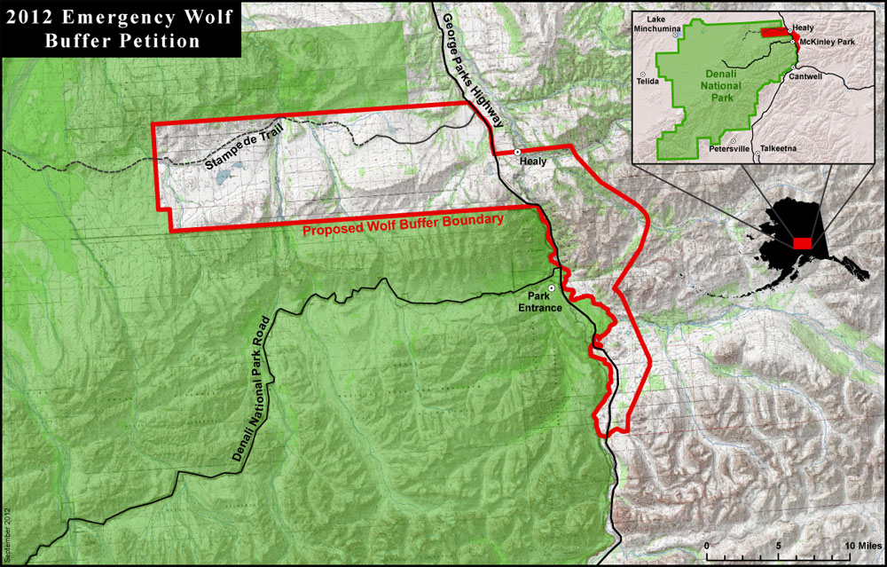Denali National Park Wolf Buffer