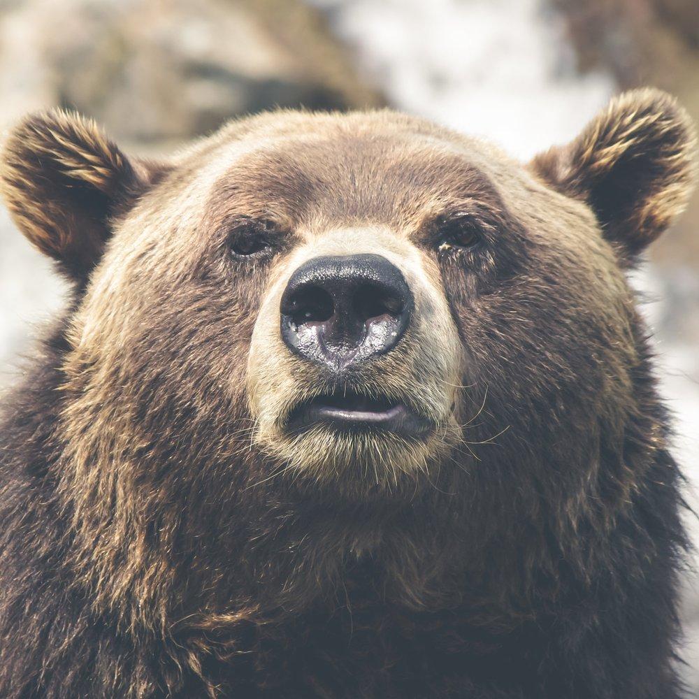 Alaska National Wildlife Refuges Rule -
