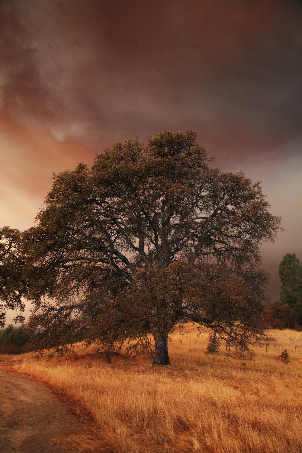 The landscape of the Sierra Nevada foothills is littered with scrub oak and grasses, extremely flammable fuels.