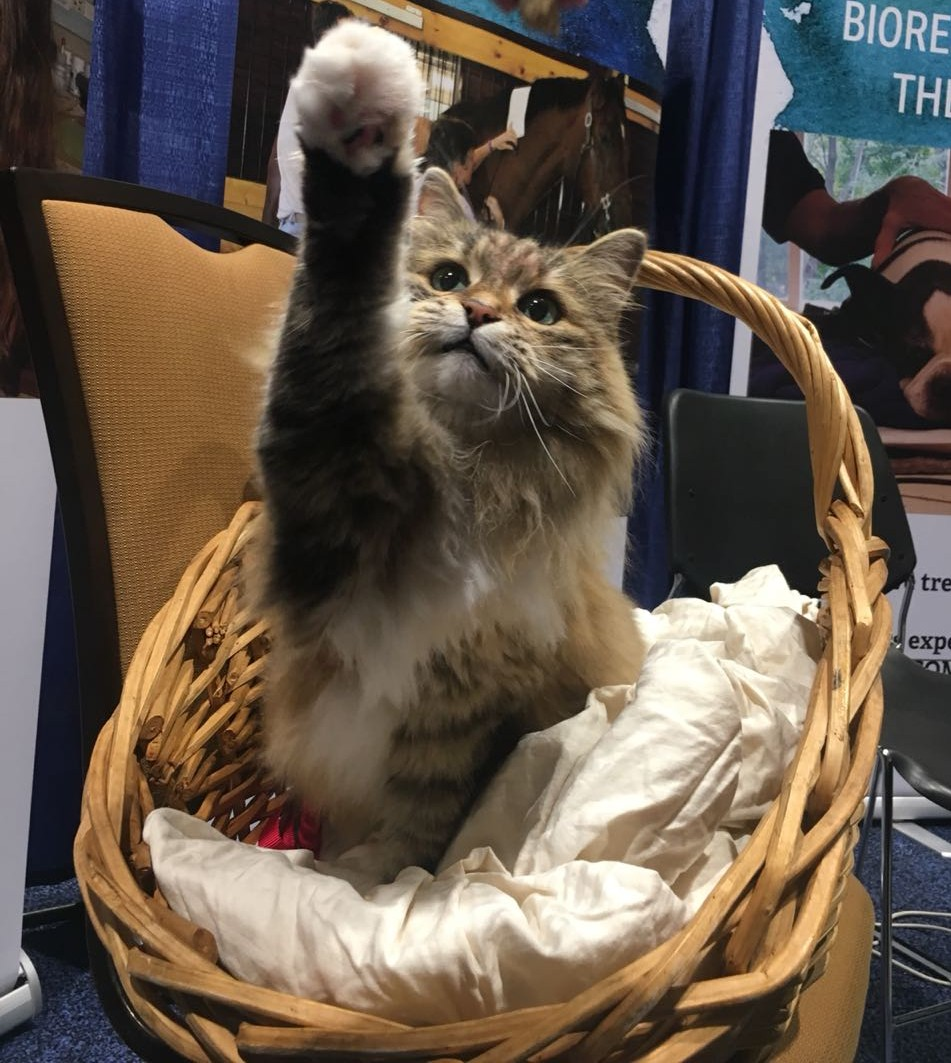 Sweetie and her basket