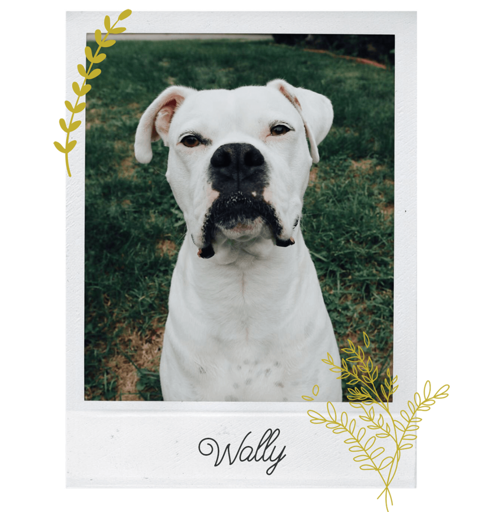 Wally-Profile-Pic23 (1).png