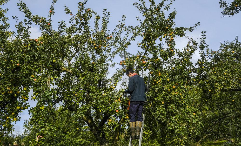 Tree Top press-17.jpg