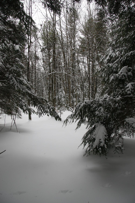 Maine Winter 019.JPG