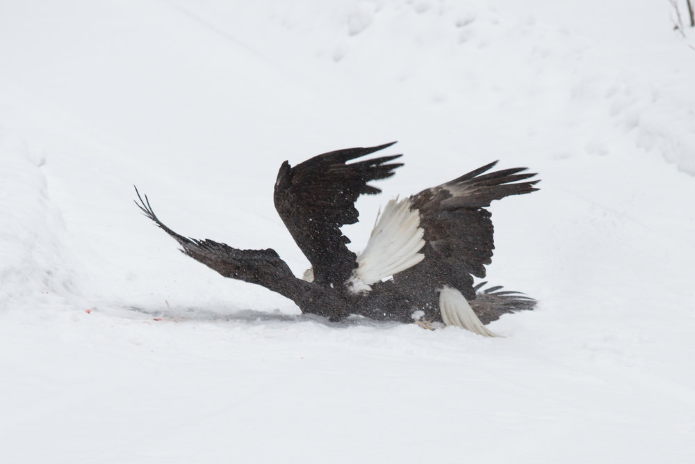 EaglesIG (2 of 9).jpg