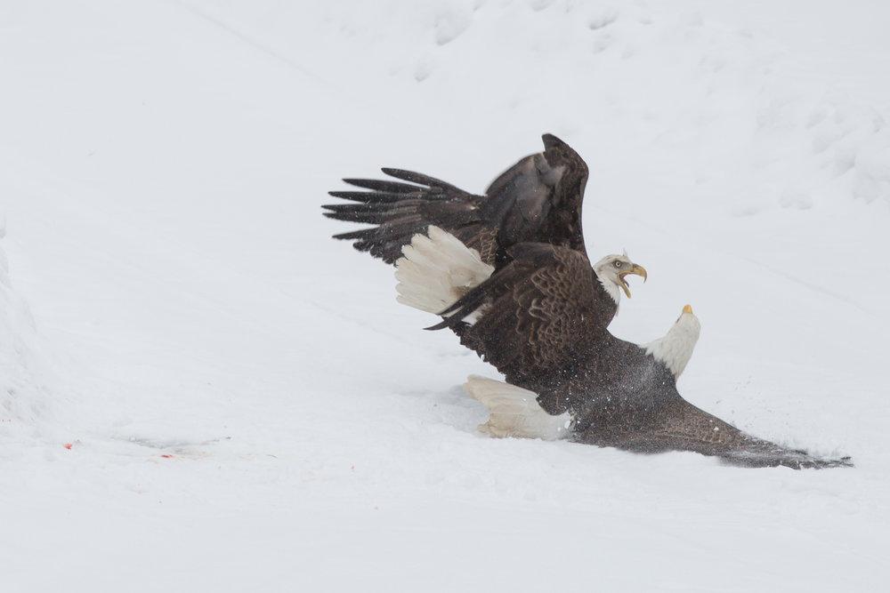 EaglesIG (7 of 9).jpg
