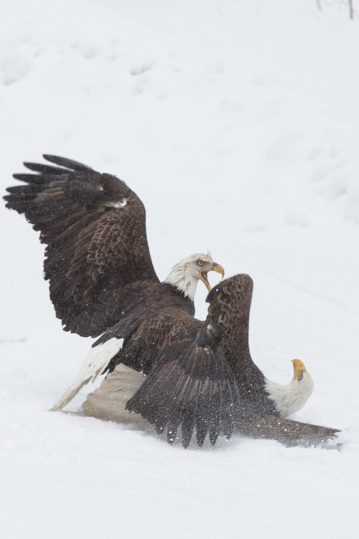 EaglesIG (8 of 9).jpg