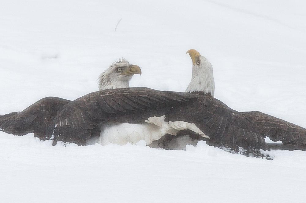 EaglesIG (1 of 9).jpg
