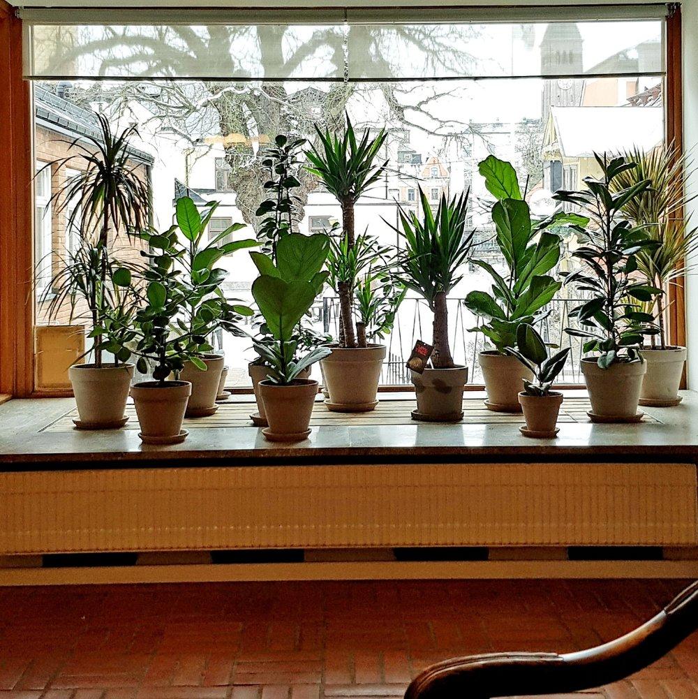 Blomfönster 1.jpg