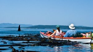 Orca Kayak Trip