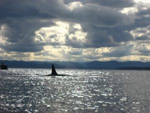 Killer Whales Kayak Tour