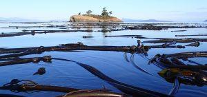 San Juan Island Sea Kayak