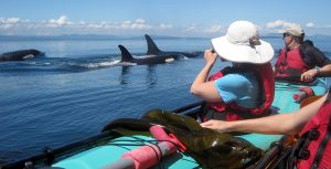 Kayaking with Whales Tours