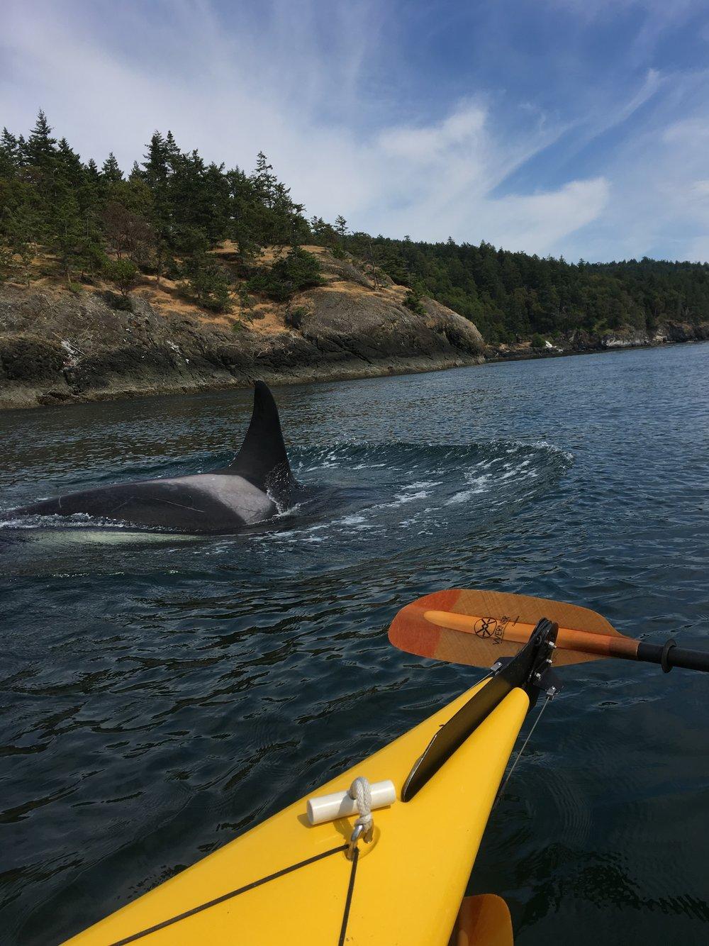 Whale 1.jpg