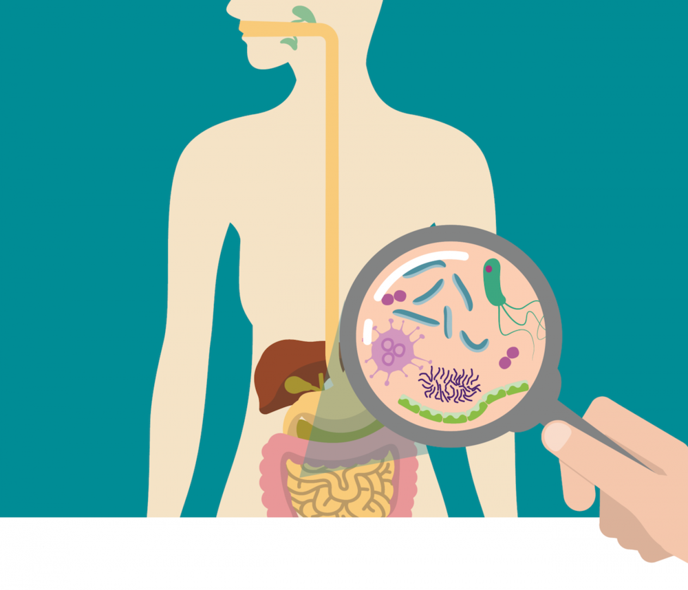 Gut_constipation_digestive-system_bacteria_integrated-physicians-medical-group_the-integrated-brain-and-spine-center-for-functional-neurology-and-medicine.png