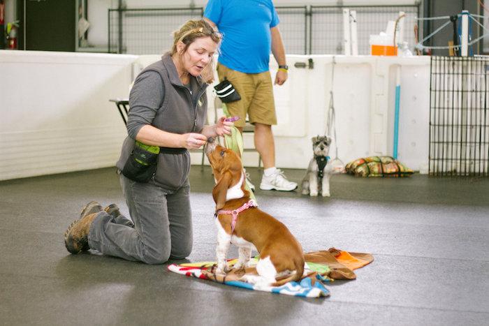 basic obedience dog training class in anacortes, WA