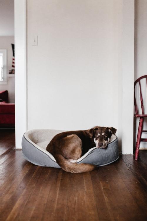 board and train for dogs in anacortes, WA