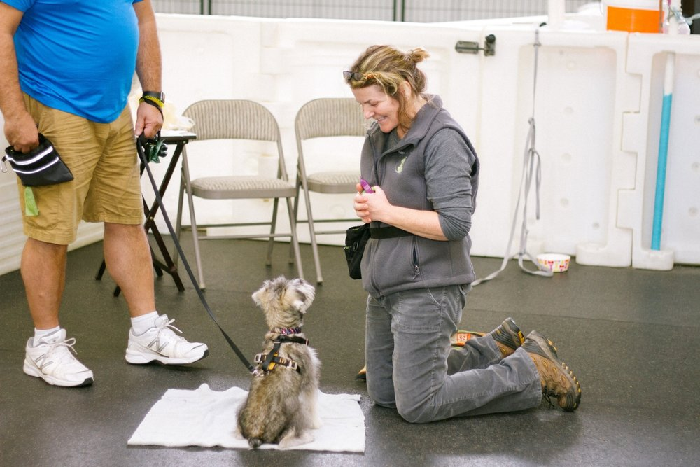 dog training at smarter than your dog