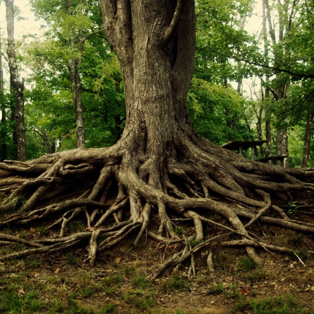 Finding Your Roots - A deep-dive into power, privilege, race, and ancestryLecture 1 / Whiteness: A Creation StoryKeynote 1 / The energetics of WhitenessKEYNOte 2 / RACE, TRAUMA, AND THE DOCTRINE OF DISCOVERYCeremony / Cauldron of WARMING