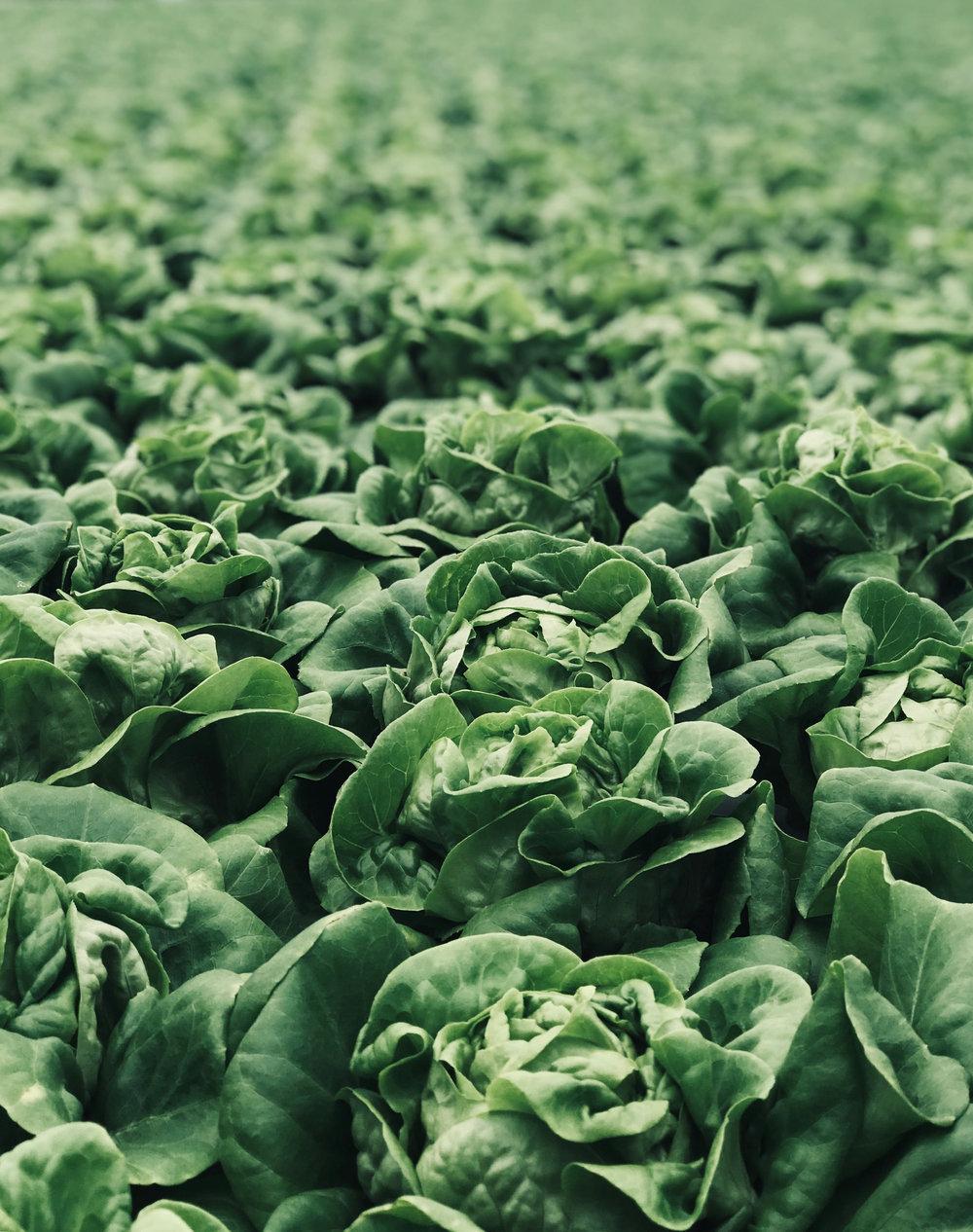 Frisk mat upplyser om och inspirerar kring hur viktigt det är med hälsosam och näringsrik mat i offentlig sektor. - LÄS MER