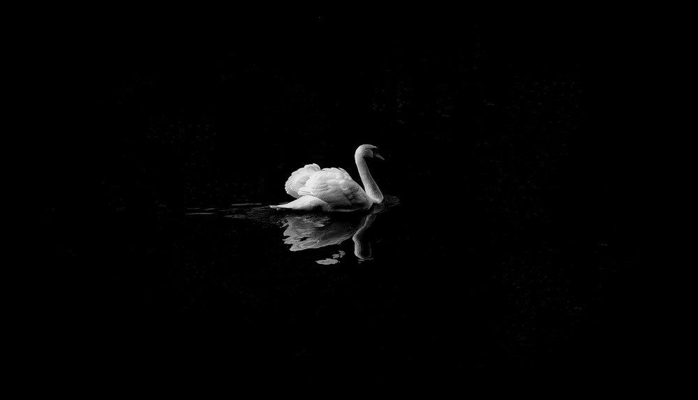 animal-1868697_1920.jpg