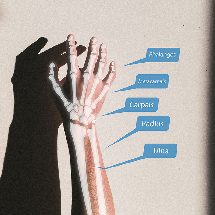 An image showing an arm with the bones and their names projected onto it.