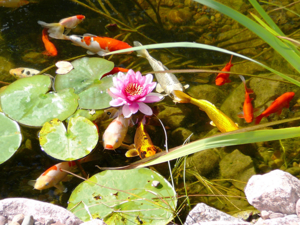 Stunning fish ponds and other water features in Madison WI