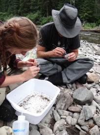 Sorting invertebrates from kick net samples collected within river habitats where Didymo blooms are prevalent.