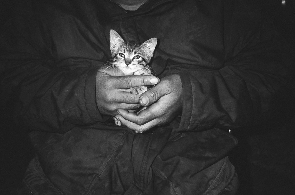 michael-stonis-cat.jpg