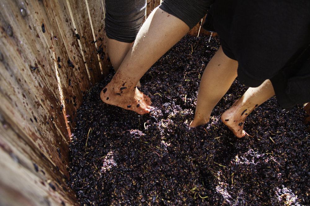 No.7 Healesville Grape Crush Socks Off Wine Yarra Valley