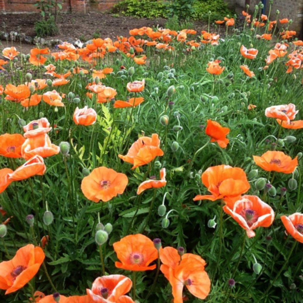 Manutenzione - La gestione del giardino