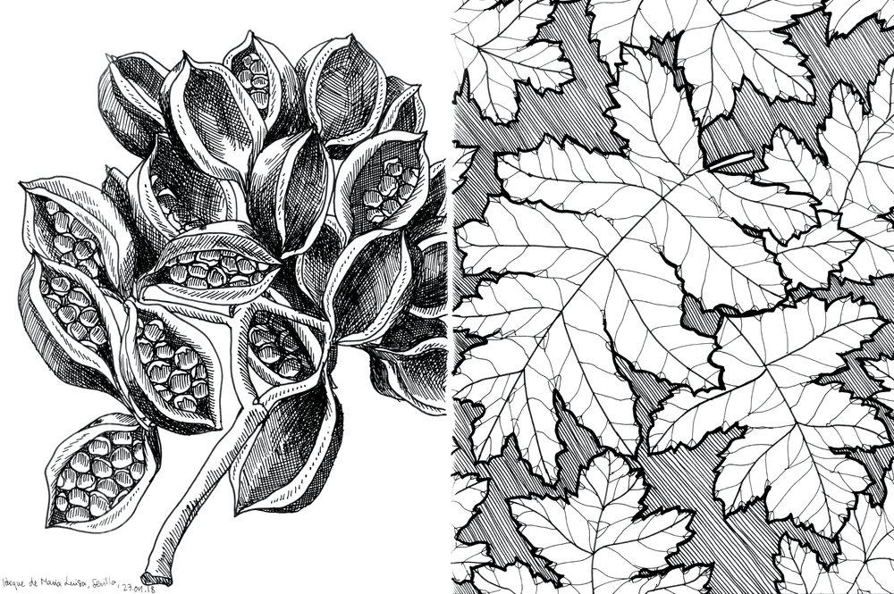 14_sevilla_plants_web.jpg