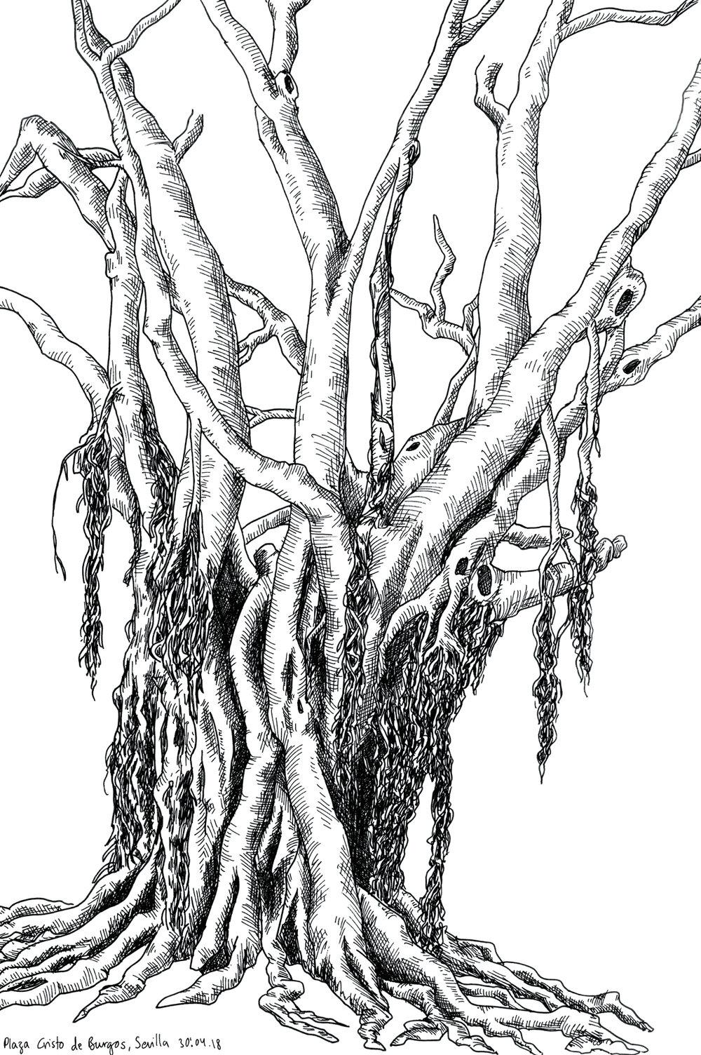 16_sevilla_banyan-tree_web.jpg